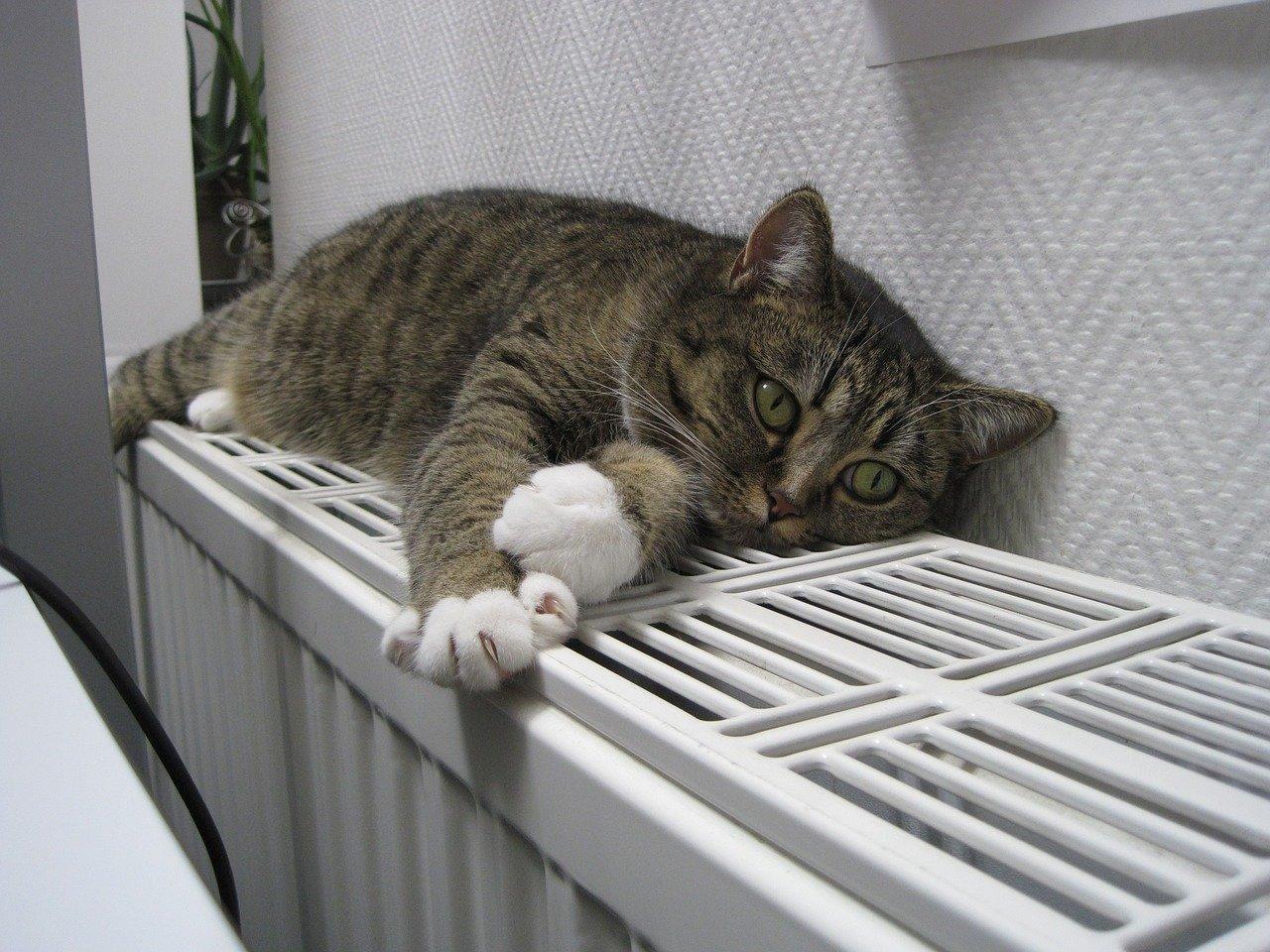 Проверенный временем и надежный радиатор Керми